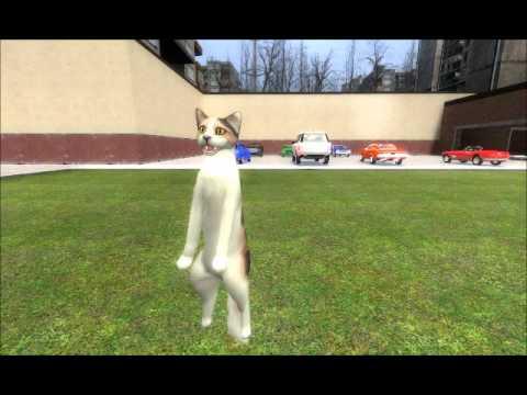 Youtube Gravity Cat Not Amused