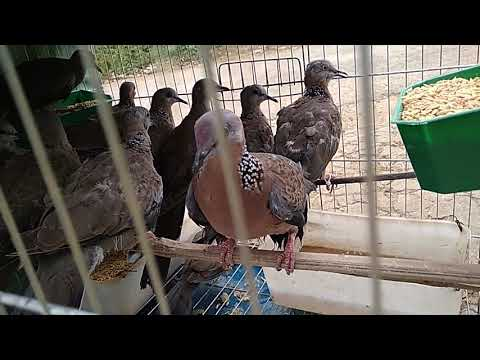 1 bu chim cu đi sài gòn