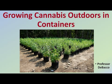 Growing Cannabis Outdoors in Containers