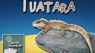 Túatara   El fósil viviente de Nueva Zelanda  (Animales del Mundo)  Mes del suscriptor 