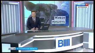 В Астрахани мужчина на глазах у детей стал стрелять в бездомную собаку