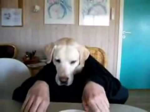Video Hài của chú chó mang tên Jerry - Clip Hài của chú chó mang tên Jerry.flv