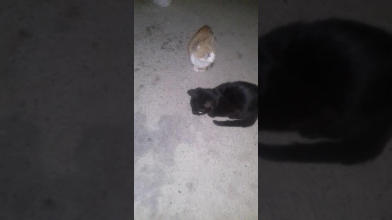 crna maca movs octuplets mama pornografija