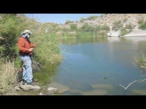Fly fishing dojo panfish party canyon lake az youtube for Canyon lake az fishing