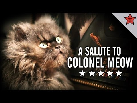 A Salute to Colonel Meow