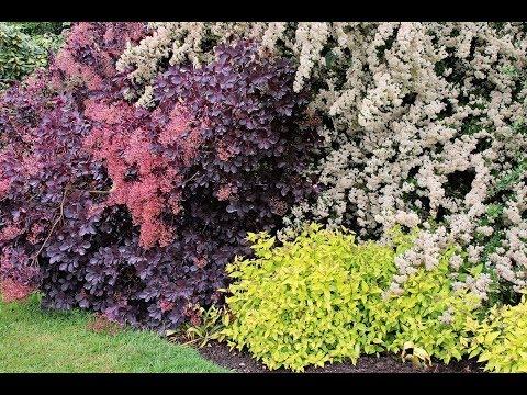 Садовые Кустарники в Ландшафтном Дизайне