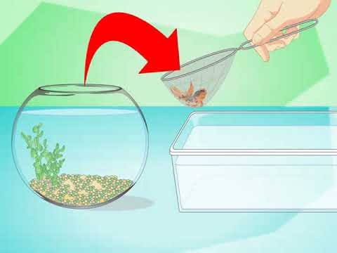 Change The Water In A Fish Bowl