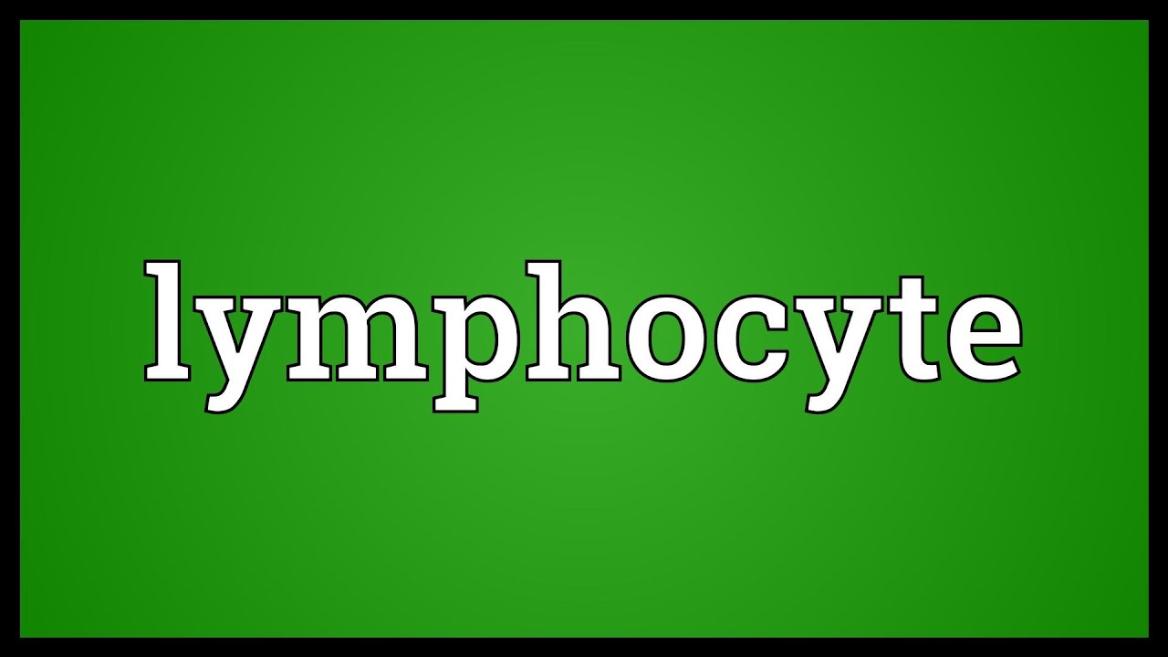 Lymphocyte Meaning