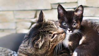 LIVE: Tiny orphan kittens in quarantine - TinyKittens.com