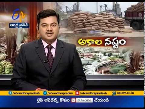 Unseasonal Rains Damage Banana Crops | at Kadapa District