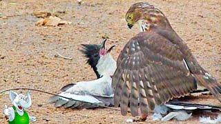 10 Сумасшедших Битв Животных Снятых На Камеру 2 часть