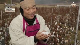 마을을 수놓은 새하얀 겨울 선물 목화! in 함양 개평마을~ l 신대동여지도 272회 thumbnail