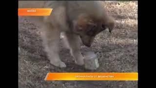 собака напала на девочку, позже девочка умерла