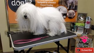 Lets Go Live Dog Grooming in Texas