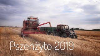 ☆ Żniwa 2019 Pszenżyto 🌾☆ Ryk Bizona Z056 | CASE 856xl 🚜 2x Autosan d-47  🔥Agro Młodzi 🔥