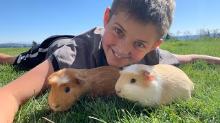 Meet our NEW PETS!! 🐹 Jasper saves to buy guinea pigs!