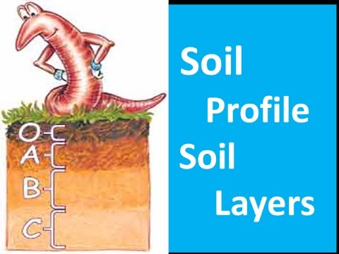 the layers in a soil profile are called