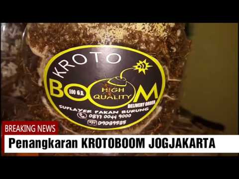 KROTOBOOM; Cara Packing Bibit Kroto
