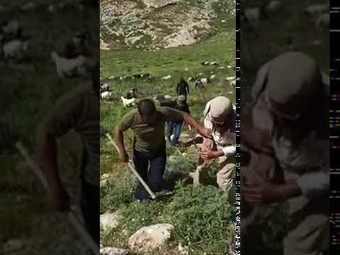 צפו: בדואים תוקפים חקלאי יהודי סמוך לישוב רימונים בבנימין