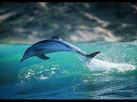 Дельфины (♪♫ Елена Дединская - Море) HD