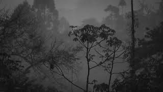 Rain & Thunder Sounds, Nature & Rain Sounds to Relax, Meditate, Study & Fall Asleep