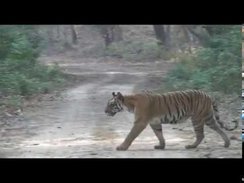 चुनौती | Chunauti - Uttarakhand | उत्तराखंड  - Promo | प्रोमो