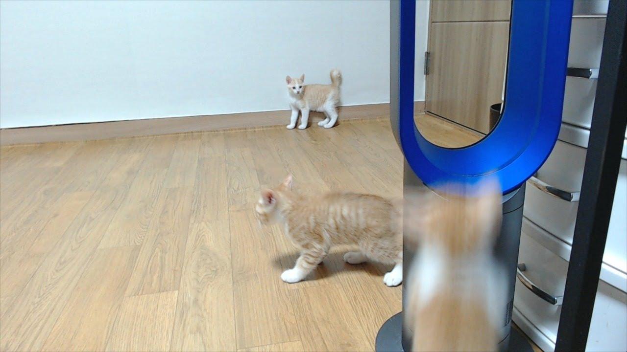 생후 54일차 고양이 육아 방송
