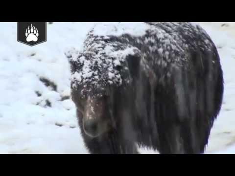 Duluth Trading Alaskan Hardgear® Bear Hide Fleece