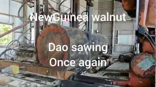 New Gunia walnut sawing (dao)
