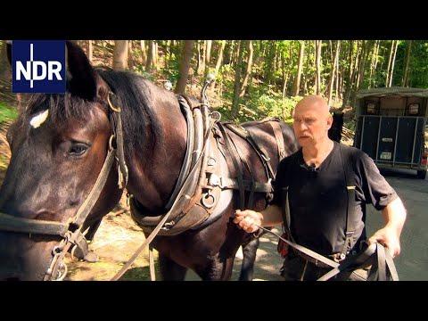 Altes neu entdecken: Handarbeit, Arbeitspferde und natürliche Baustoffe | die nordstory | NDR Doku