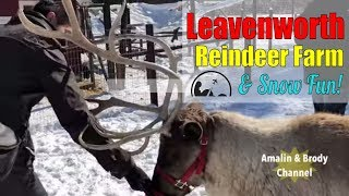 Leavenworth Reindeer Farm & Snow Fun At Enchantment Park With Kids [4K]