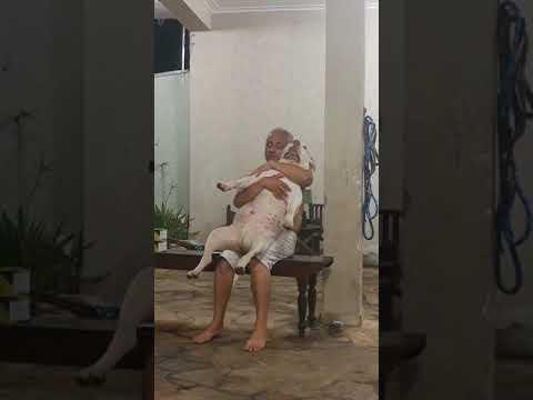 No quería perros en casa, pero este pitbull se ganó su corazón
