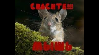 Прикол мышь застряла в разетке
