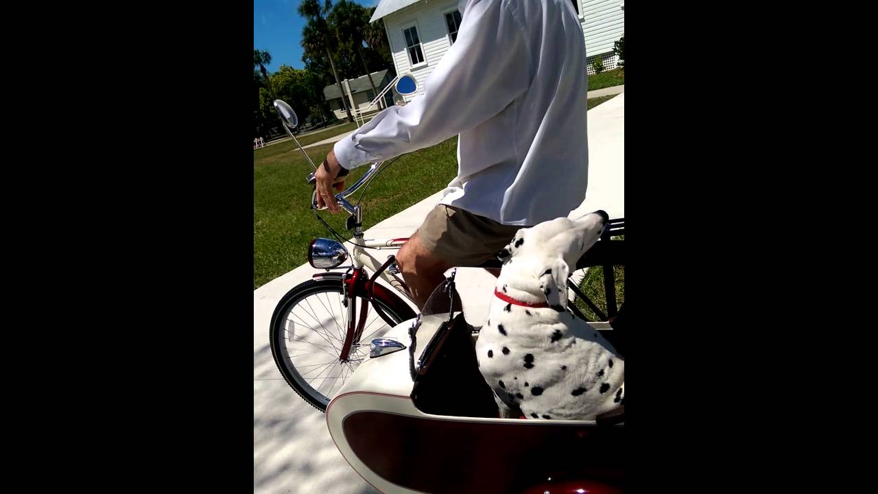 Bicycle Sidecar For Dalmatian 3 Youtube