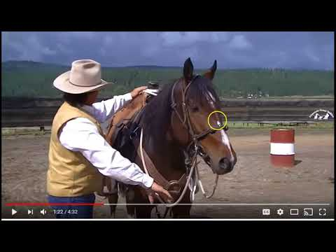 Are You Kidding Me - Someone Teaching A Snatch Drill & Calling It Horse Training