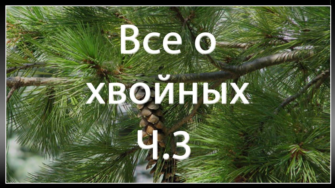 Родового дерева своими руками 222