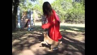 Mondioring Border Terrier Style
