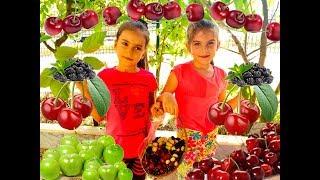 Dalından Meyve Topladık / We Collected Fruit / Eğlenceli Çocuk Videosu