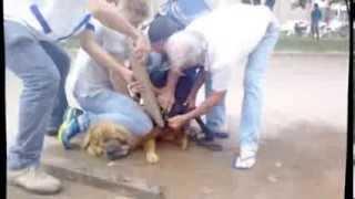 Pit Bull ataca C-c em Colider