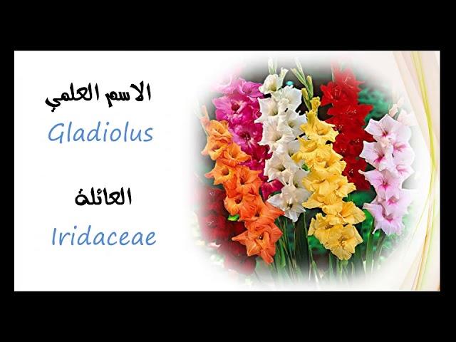 انواع الزهور واسمائها أسماء أشهر أنواع الزهور والورود بالعربية والإنجليزية صور ورد Youtube