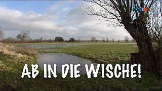 Ab in die Wische! - 2. FDJ-Jugendobjekt der DDR [DOKU] (mdr 2o1o)