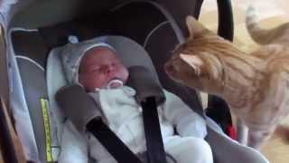 Реакция кота на новорожденного