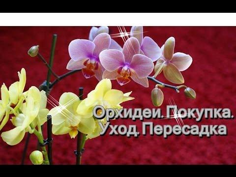 Как ухаживать за орхидеями, выращивание и уход в домашних
