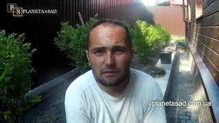 видео Посадка кустарников