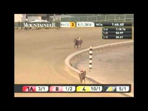 Calidoscopio incredible come from behind win brooklyn handicap 6-7 ...