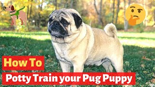 How to Potty train a puppy pug? Easy yet Effective Working Technique