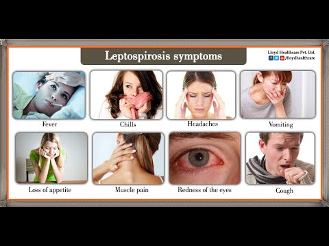 Leptospirosis : Treatment and Symptoms : New kit the cost per test will only be Rs. 50
