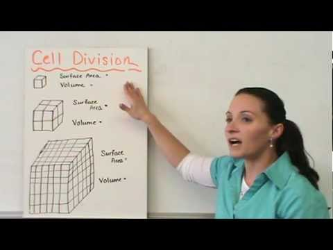 Cell Growth Division Reproduction