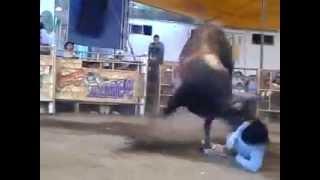 TRAGADIABLOS VS IGUANA DE ACAMILPA EN SAN BERNABE.