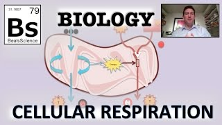Biology - Cellular Respiration